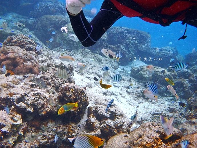 39 沖繩自由行 水上活動 香蕉船 Marine Support TIDE 殘波 藍洞海洋觀光 藍洞浮潛&珊瑚礁 餵食熱帶魚浮潛