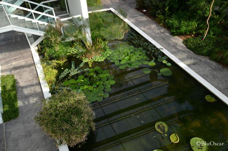 Orto Botanico Padova 15 06 2016 N 6