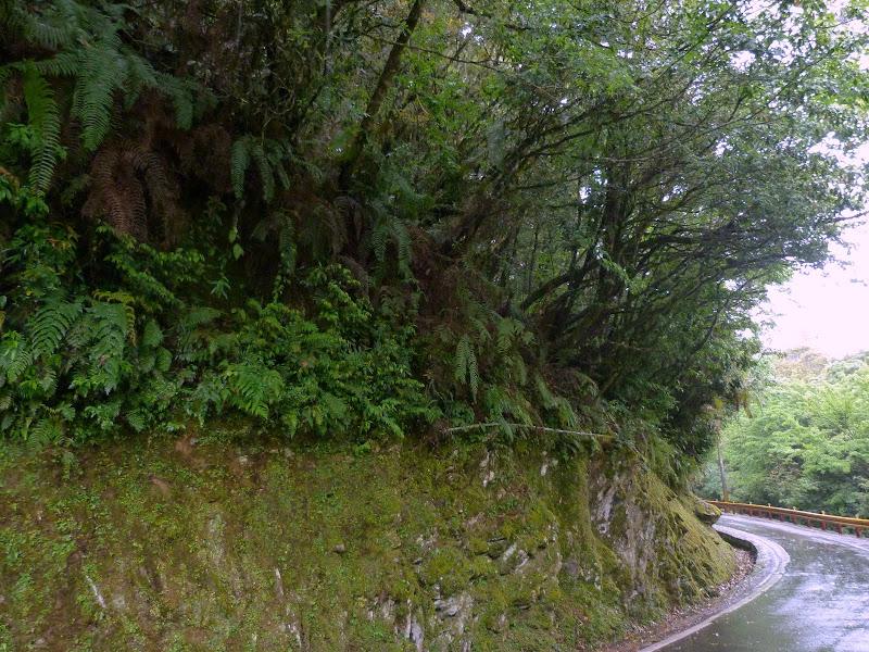 TAIWAN. Weekend Randonnée, Taipei à  Hehuanshan en passant par Puli, retour par les gorges de Taroko - P1280970.JPG