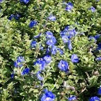 blue daze.bmp
