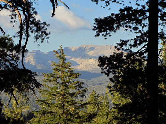 mountain through the trees