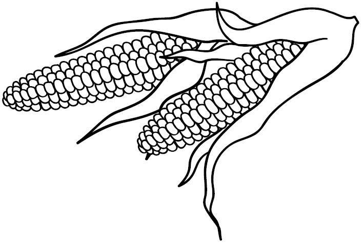 [maiz+elotes%5B2%5D]