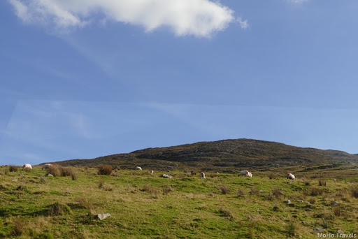 The Ring of Kerry (1 of 1)-78