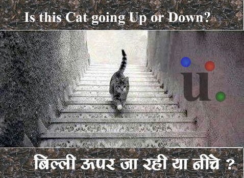 Is the Cat in the picture going Up or Down? image