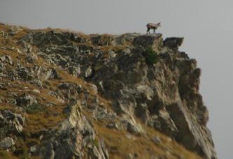 Alpine Trekking 18