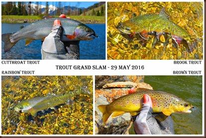 Trout Grand Slam-29 May 2016