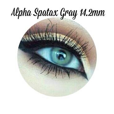 ALPHA SPATAX GRAY