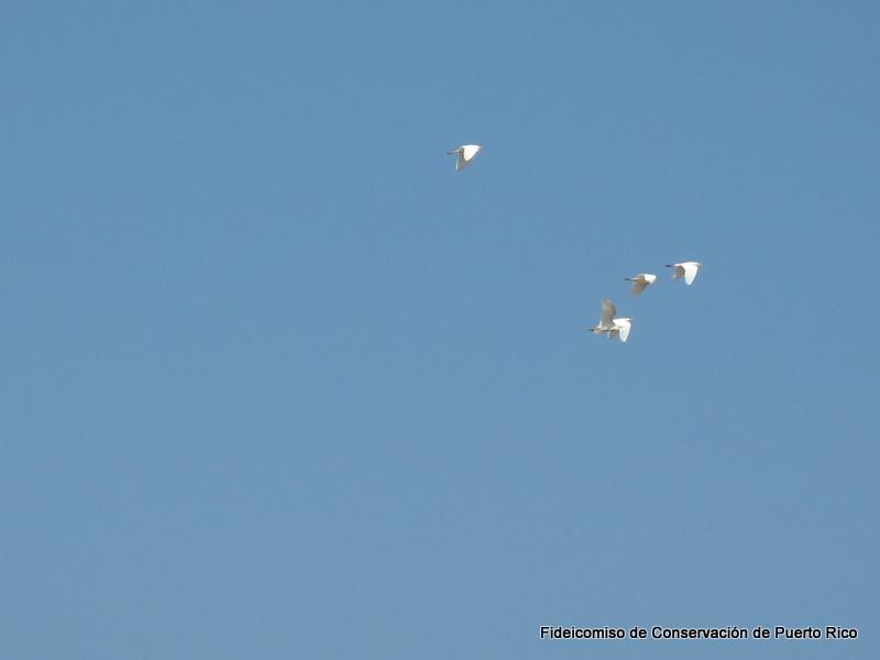 Arq-10-03-20 (9).jpg