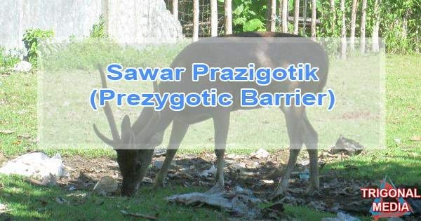 Sawar Prazigotik (Prezygotic Barrier)