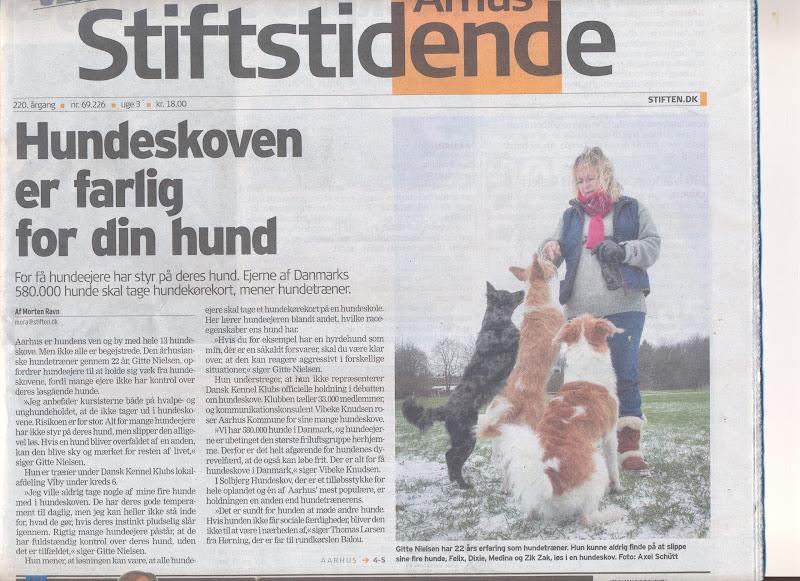 Blandede hunde - hundeskov2%2B001.jpg