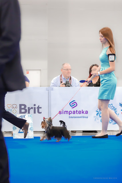 World Dog Show-2016 0053