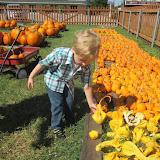 Pumpkin Patch 2015 - 12141088_10153209194972404_8123825775134776654_o.jpg