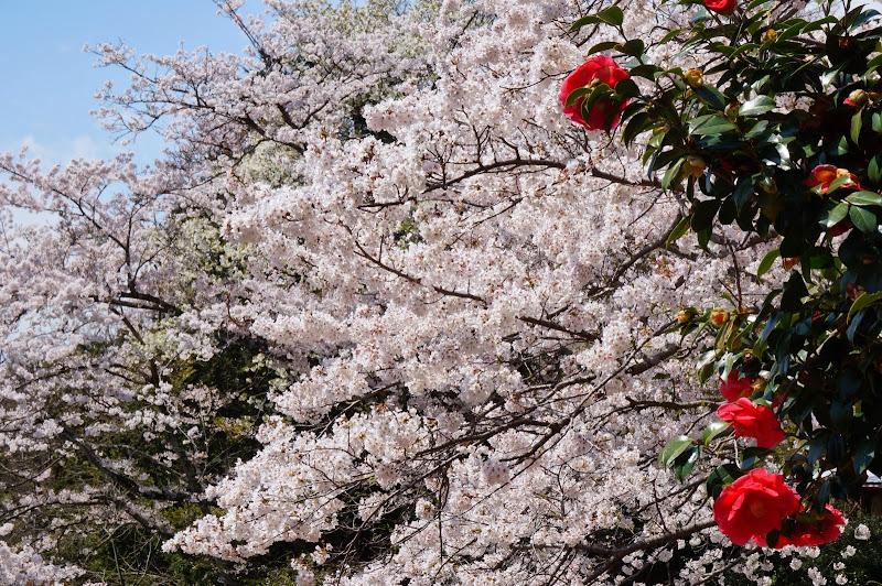 2014 Japan - Dag 7 - britt-DSC03576-0047.JPG