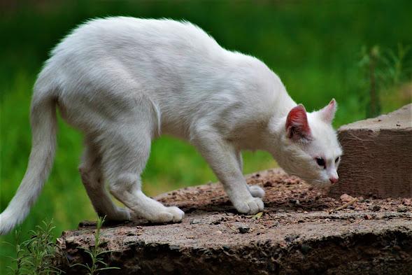 Cute, Funny and Unique Cat Names