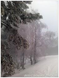 Туман под Хвалынском