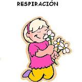 RESPIRACION.JPG