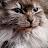 David Szach avatar image