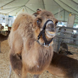 Fort Bend County Fair 2015 - 100_0185.JPG