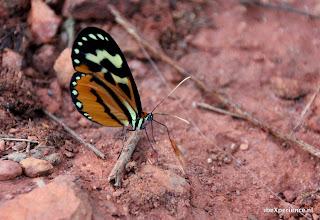 Bolivia Chiquitos