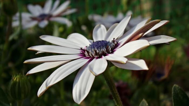 St Annes Florist: Prominent Flowers From Australia