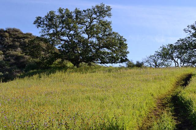 oak and meadow
