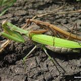 Mantis Progress Pics