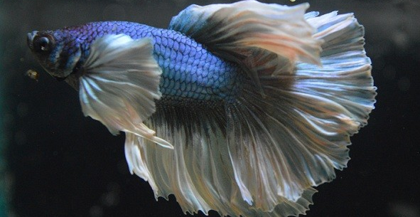 Download 88 Gambar Ikan Hias Unik HD Terpopuler