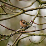 Vogels en dieren - IMG_5852.JPG