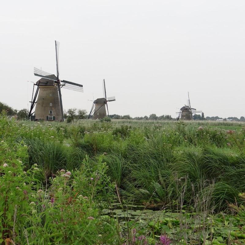 Day_6_Kinderdijk_23.JPG