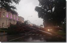 Albero caduto vicino all'ospedale Cardarelli