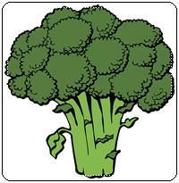 คำศัพท์ภาษาอังกฤษ_broccoli_Vegetable