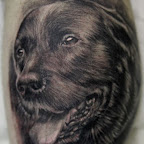 pt00324-Dog_portrait_by_Remistattoo.jpg