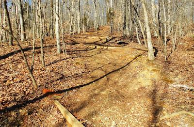 Cox Mountain Trail