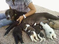 Lilly con i cuccioli
