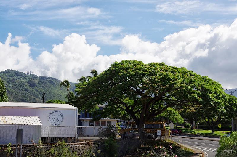 06-19-13 Hanauma Bay, Waikiki - IMGP7443.JPG