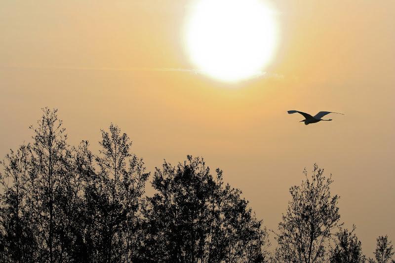 Volo di Airone di Fotodiale