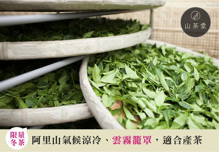 阿里山採摘茶葉