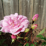 Gardening 2010 - 101_0994.JPG