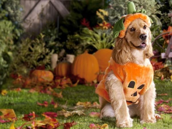 Happy Halloween With Dog, Halloween
