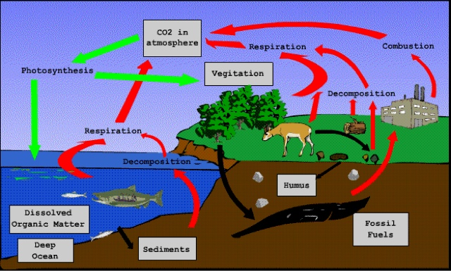 Fish tank oxygencarbon dioxide cycle ccuart Choice Image