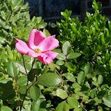 Gardening 2010 - 101_1370.JPG