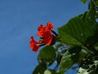 Strandblume