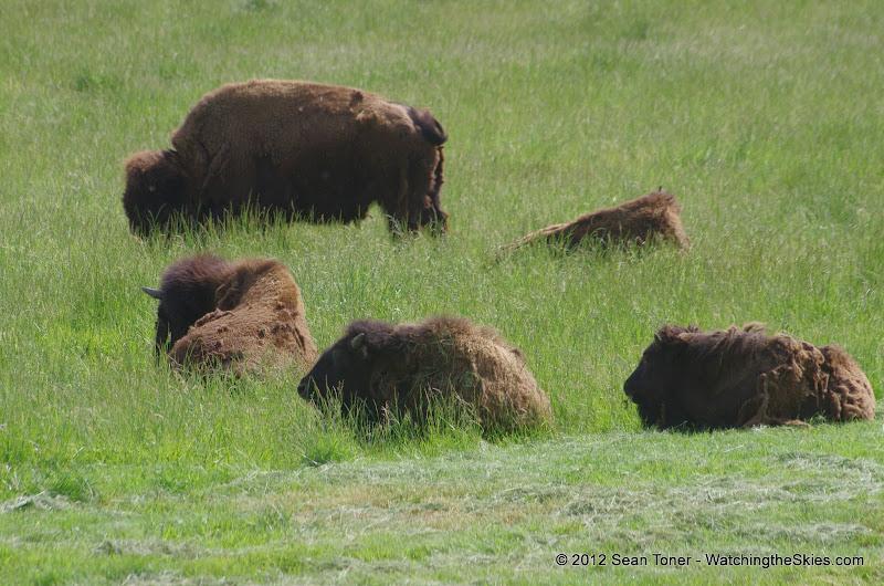 05-11-12 Wildlife Prairie State Park IL - IMGP1589.JPG