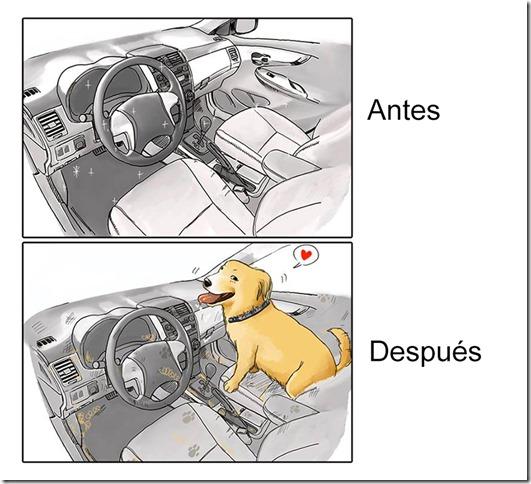 antes y despues de tener   perro (3)
