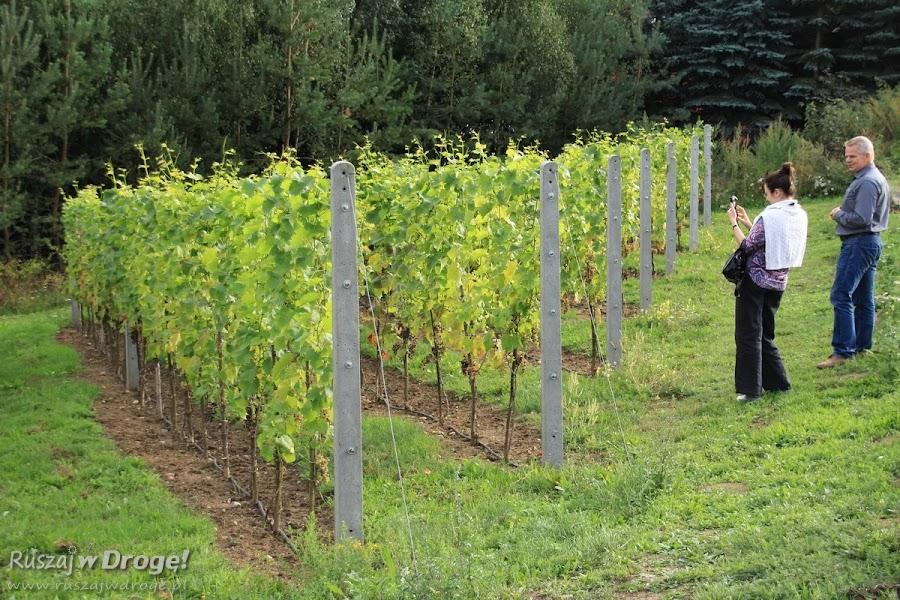 Winnica w Miradowie na Kociewiu