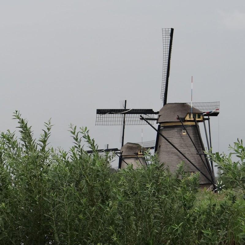 Day_6_Kinderdijk_40.JPG