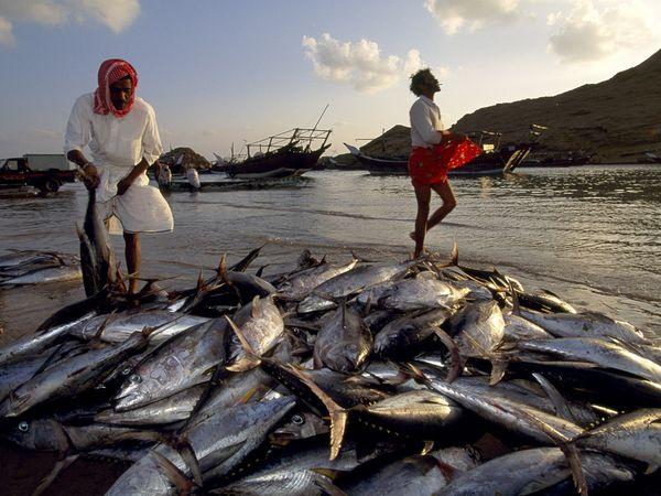 Oman fishermen.jpg