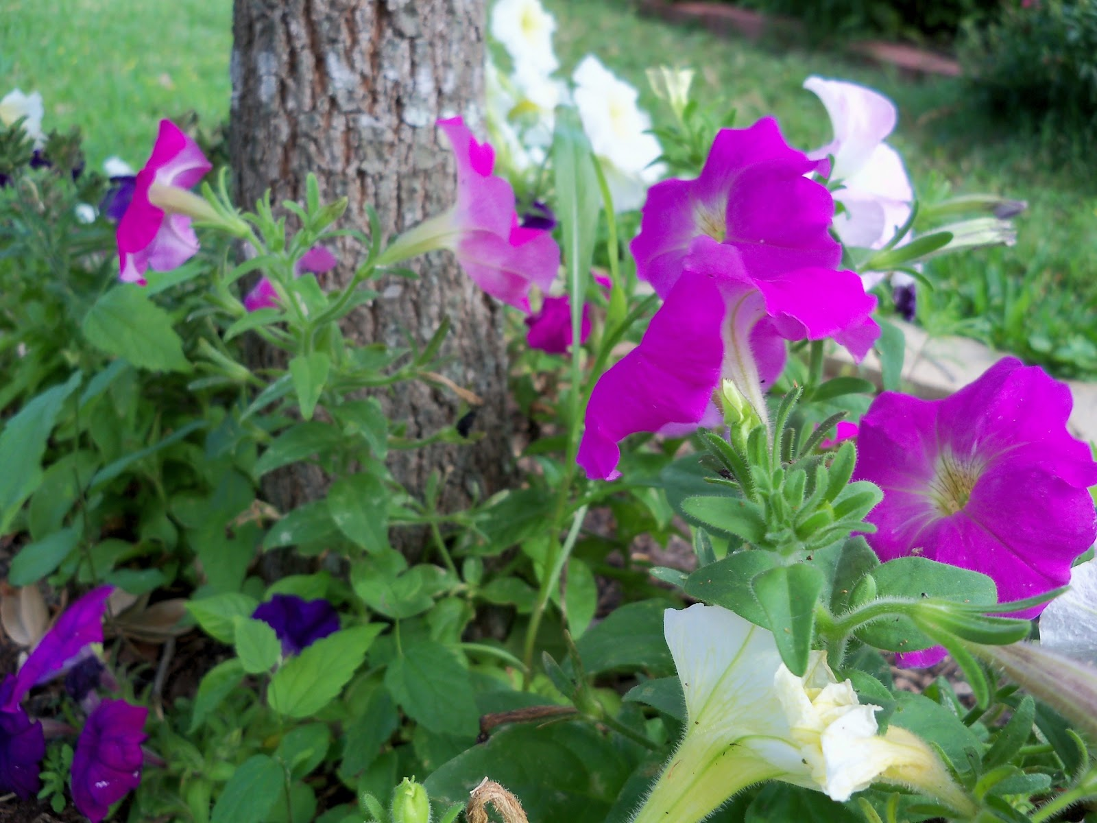 Gardening 2012 - 115_1625.JPG