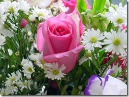 margaritas flores (50)