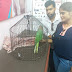 Parrot refusing to eat- treated in Pluto Pet Clinic, Ranchi by Dr Suranjan Sarkar